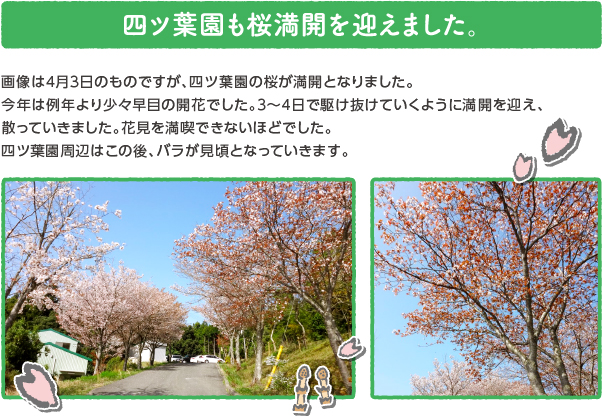 oshirase_popup_180420.jpg