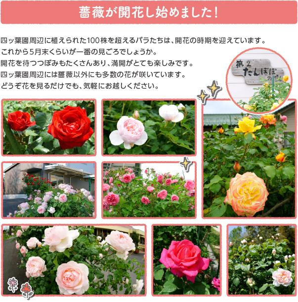 oshirase_popup_180521.jpg