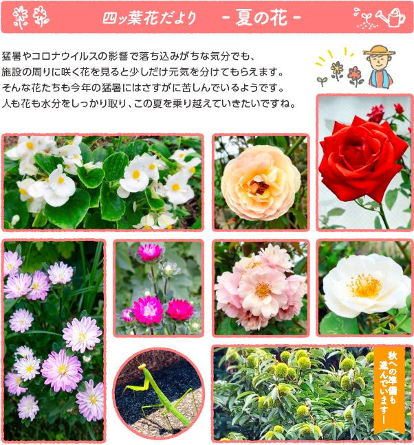 oshirase_popup_200826.jpg
